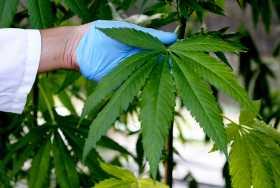 141024_EM_MarijuanaBuysEbola