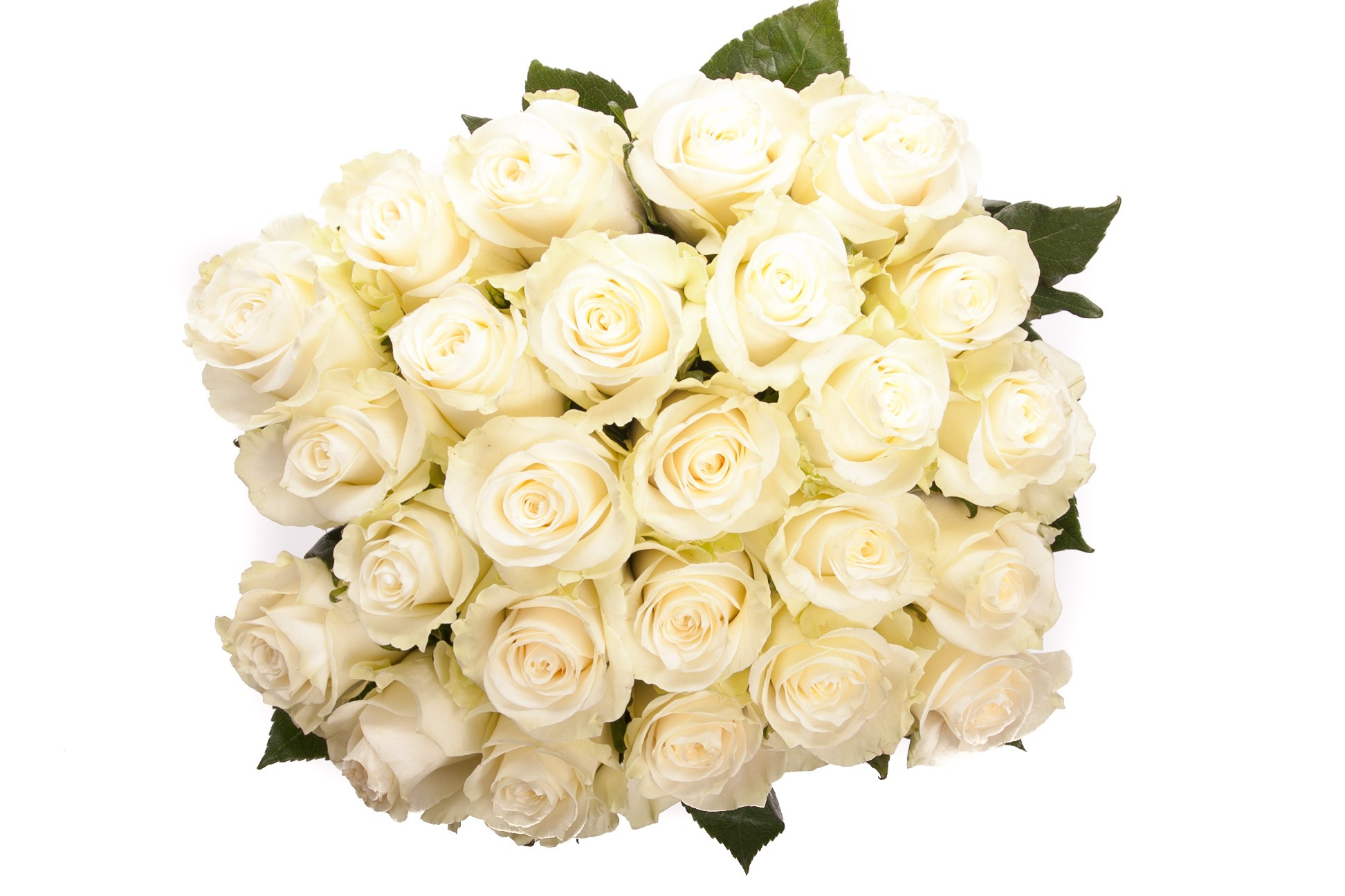 Valentine flowers and their meanings glamsquad magazine white roses biocorpaavc Choice Image